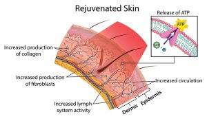 Skin Rejuvenated by Red Light Therapy
